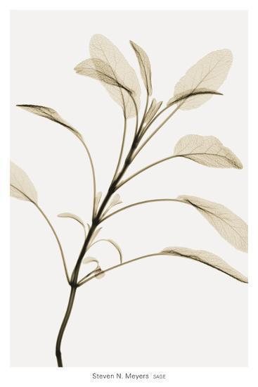 Sage-Steven N^ Meyers-Art Print