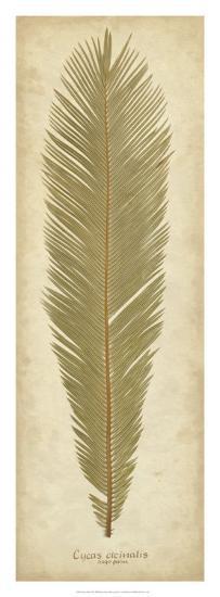 Sago Palm II-Becky Davis-Giclee Print