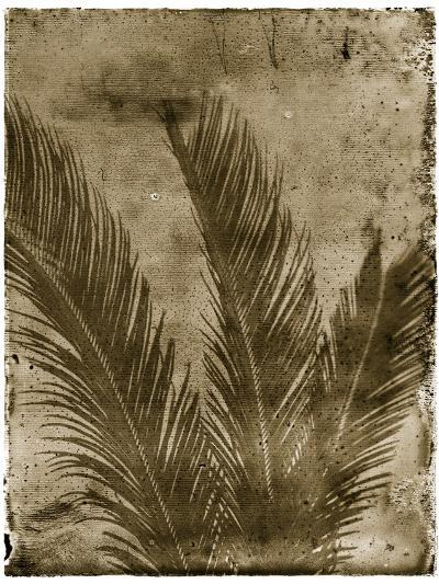 Sago Palm-John Kuss-Photographic Print