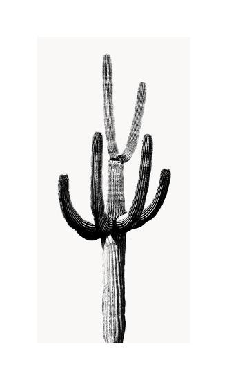 Saguaro Black & White III-Mia Jensen-Giclee Print