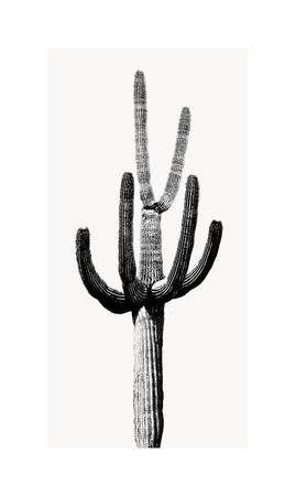 https://imgc.artprintimages.com/img/print/saguaro-black-white-iii_u-l-f8vepx0.jpg?p=0