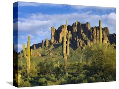 Saguaro cacti and Superstition Mountains at Lost Dutchman State Park, Arizona-Tim Fitzharris-Stretched Canvas Print