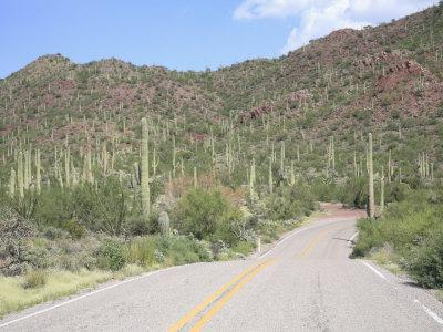 https://imgc.artprintimages.com/img/print/saguaro-cacti-saguaro-national-park-tuscon-mountain-district-west-unit-tucson-arizona_u-l-p8znyv0.jpg?p=0