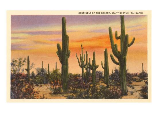 Saguaro Cacti--Premium Giclee Print