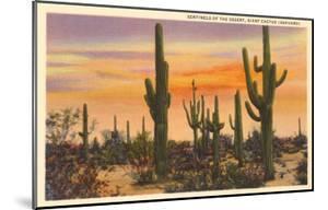 Saguaro Cacti