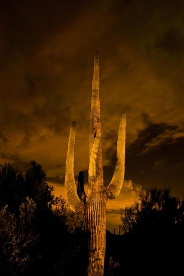 Saguaro Cactus At Night, Arizona-Steve Gadomski-Photographic Print