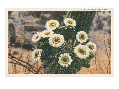 Saguaro Cactus Blossoms--Art Print