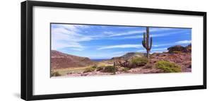 Saguaro Cactus in Arid Area, El Embudo, Isla Partida, La Paz, Baja California Sur, Mexico