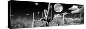 Saguaro cactus in moonlight at Saguaro National Park, Tucson, Arizona, USA