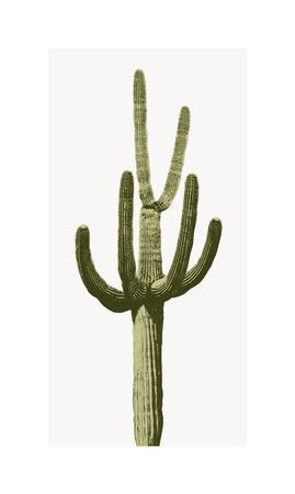 https://imgc.artprintimages.com/img/print/saguaro-iii_u-l-f8vfvb0.jpg?p=0