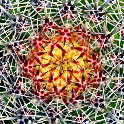 https://imgc.artprintimages.com/img/print/saguaro-mandala-ii_u-l-q10q2k60.jpg?p=0