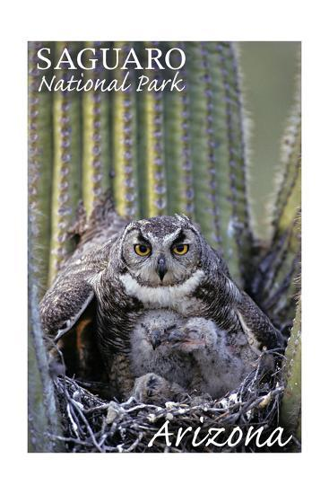 Saguaro National Park, Arizona - Owl and Babies-Lantern Press-Art Print