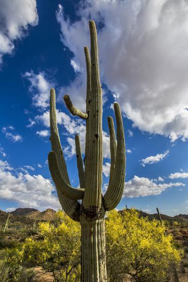 Saguaro National Park, Arizona-Ian Shive-Photographic Print