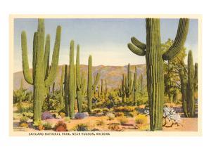 Saguaro National Park, Tucson, Arizon