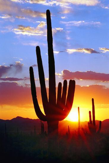 Saguaro Sunset-Douglas Taylor-Photographic Print