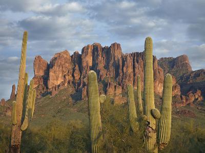Saguaros and Superstition Mountains, Lost Dutchman State Park, Arizona, Usa-Tim Fitzharris-Photographic Print