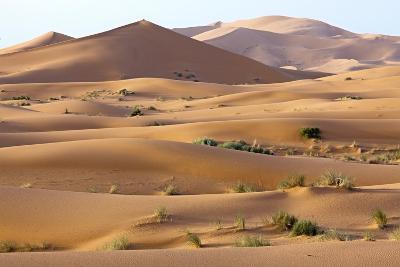 Saharan Sand Dunes-Bob Gibbons-Photographic Print