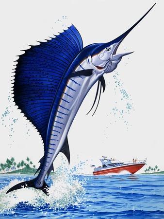 https://imgc.artprintimages.com/img/print/sail-fish_u-l-p54zzo0.jpg?p=0