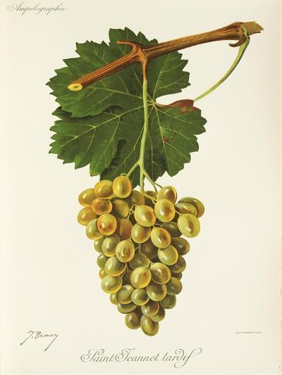 Saint-Jeannet Tardif Grape-J. Troncy-Giclee Print