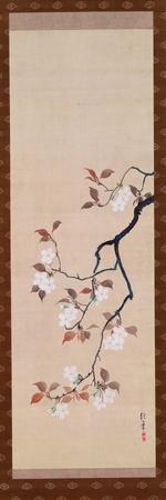 Hanging Scroll Depicting Cherry Blossoms, from a Triptych of the Three Seasons, Japanese