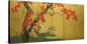 Maple Tree by Sakai Hoitsu