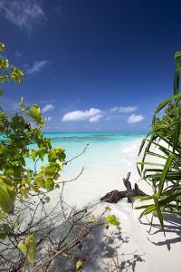 Beach on Desert Island, Maldives, Indian Ocean, Asia by Sakis Papadopoulos
