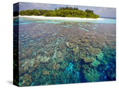 Coral Plates, Lagoon and Tropical Island, Maldives, Indian Ocean, Asia