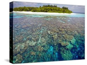Coral Plates, Lagoon and Tropical Island, Maldives, Indian Ocean, Asia by Sakis Papadopoulos