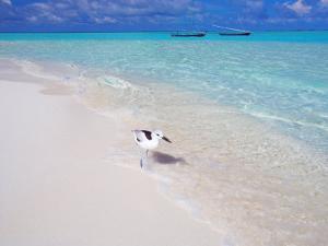 Heron Walking Along Waters Edge on Tropical Beach, Maldives, Indian Ocean by Sakis Papadopoulos