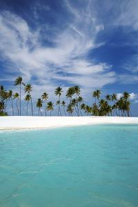 Palm Trees and Tropical Beach, Maldives, Indian Ocean, Asia by Sakis Papadopoulos