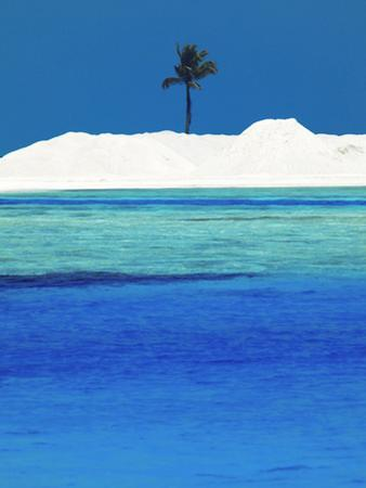 Sandbank and Palm Tree on Tropical Beach, Maldives, Indian Ocean, Asia by Sakis Papadopoulos