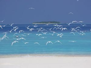 Sea Gulls and Resort, the Maldives, Indian Ocean by Sakis Papadopoulos