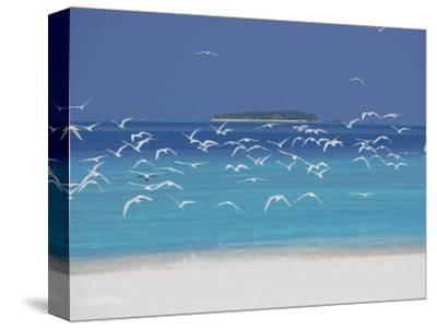 Sea Gulls and Resort, the Maldives, Indian Ocean