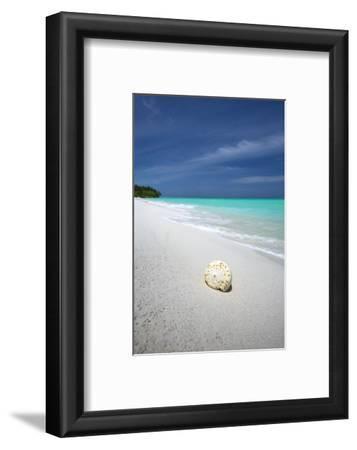 Shell on Tropical Beach, Maldives, Indian Ocean, Asia
