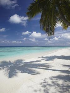 Tropical Beach, Maldives, Indian Ocean, Asia by Sakis Papadopoulos