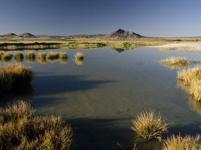 Saline Ponds Near Tecopa, in the Mojave Desert-Gordon Wiltsie-Photographic Print