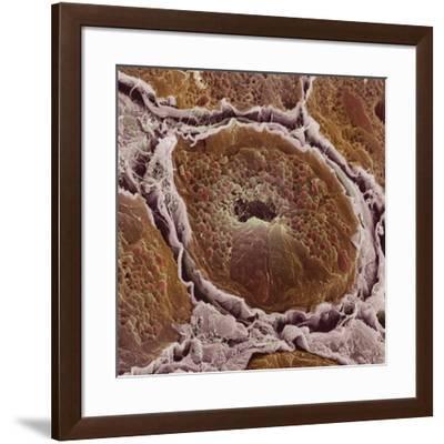 Salivary Gland-Steve Gschmeissner-Framed Photographic Print