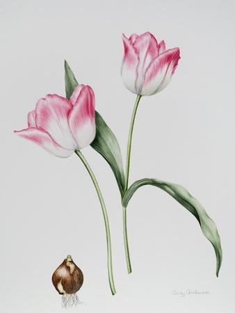 Tulip Meissner Porcellan with Bulb