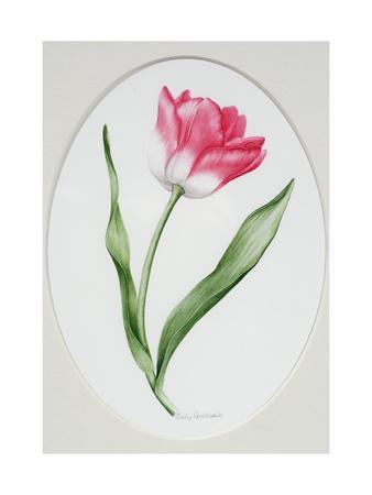 Tulip Meissner Porzellan Singe