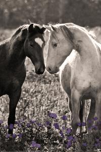 Horses I by Sally Linden