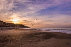 Morning Beach Walk by Sally Linden
