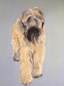 Wheaten Terrier by Sally Muir