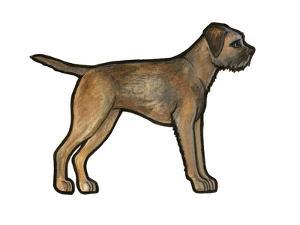 Border Terrier by Sally Pattrick