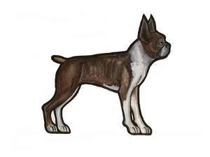 Boston Terrier by Sally Pattrick