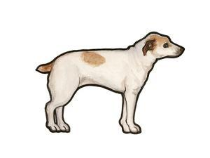 Jack Russell by Sally Pattrick