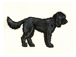 Labradoodle Black by Sally Pattrick