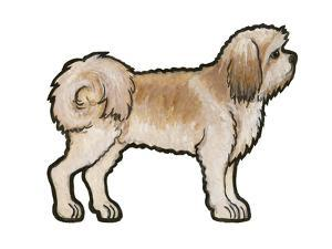 Lhasa Apso by Sally Pattrick
