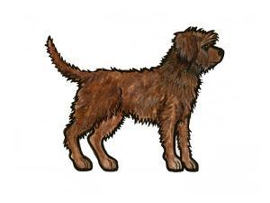 Rough Patterdale by Sally Pattrick