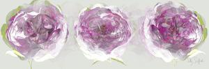 Pink Allure II by Sally Scaffardi