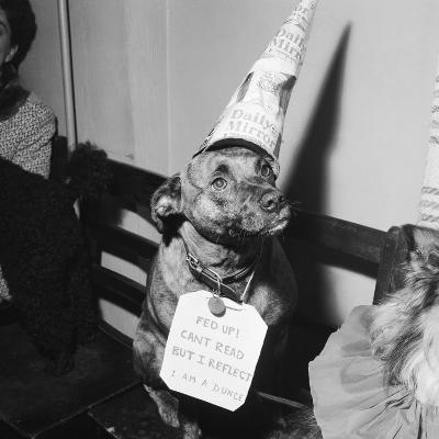 Sally the Dog at Annual Dogs Christmas Party in Bristol, 1958-Maurice Tibbles-Photographic Print